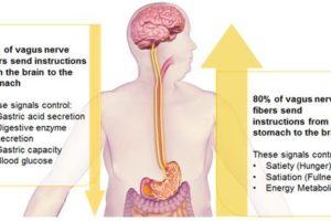 Contro l'obesità arriva il pacemaker dell'appetito