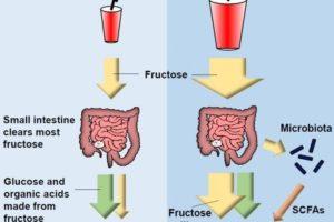 """Un eccesso di fruttosio """"ingrassa"""" il fegato"""