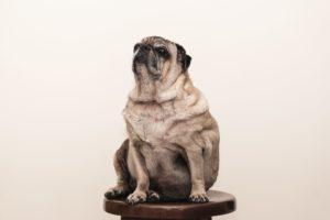 Genetica e obesità, uno studio rivela il legame